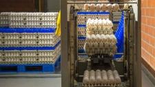 bedrijfsbeeld-pluimveebedrijf-ekkelkamp-11