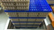 bedrijfsbeeld-pluimveebedrijf-ekkelkamp-14