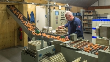 bedrijfsbeeld-pluimveebedrijf-ekkelkamp-05