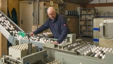 bedrijfsbeeld-pluimveebedrijf-ekkelkamp-07