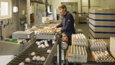 bedrijfsbeeld-pluimveebedrijf-ekkelkamp-19