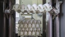 bedrijfsbeeld-pluimveebedrijf-ekkelkamp-25
