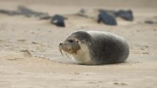 Een gewone zeehond rust uit op het strand-6165