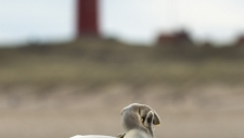 Een gewone zeehond rust uit op het strand-6175