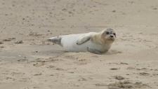 Een gewone zeehond rust uit op het strand-6183