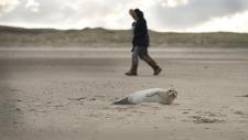 Een gewone zeehond rust uit op het strand-6184