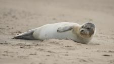 Een gewone zeehond rust uit op het strand-6185