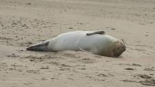 Een gewone zeehond rust uit op het strand-6191