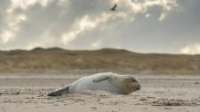 Een gewone zeehond rust uit op het strand-6193