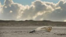 Een gewone zeehond rust uit op het strand-6196