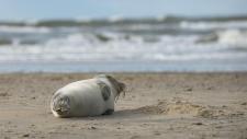 Een gewone zeehond rust uit op het strand-6209