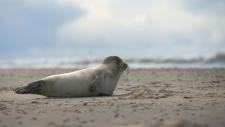 Een gewone zeehond rust uit op het strand-6222