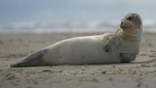 Een gewone zeehond rust uit op het strand-6226
