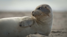 Een gewone zeehond rust uit op het strand-6231
