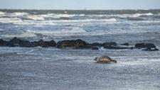 Een gewone zeehond rust uit op het strand-6238
