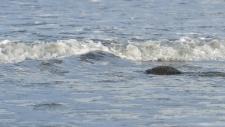 Een gewone zeehond rust uit op het strand-6240