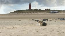 Een gewone zeehond rust uit op het strand Texel-6156